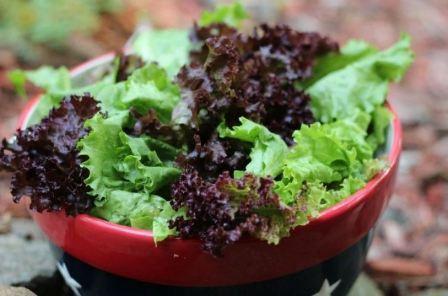 Как хранить листья салата в холодильнике