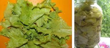 Как хранить свежие листья салата